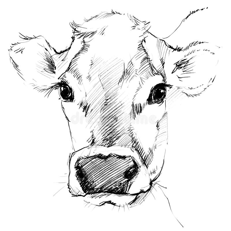 Free Cow Sketch. Dairy Cow Pencil Sketch. Stock Images - 68310774