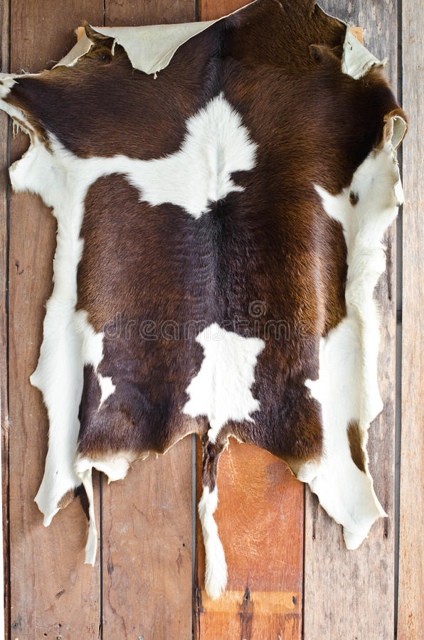 Cow skin. Cow skin on the old wooden wall royalty free stock photography