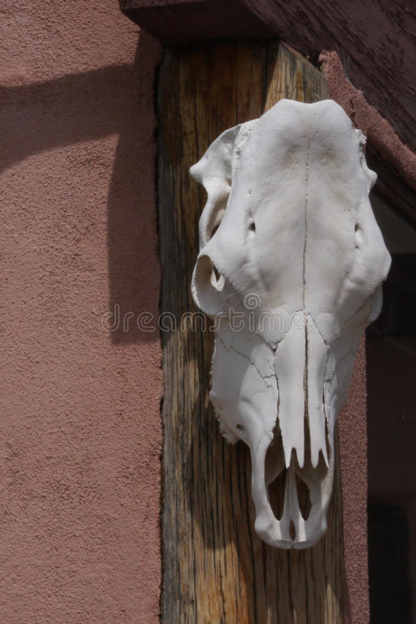 Cow skull. A cow skull with light in the eye sockets hungs on an adobe wall stock images