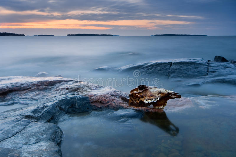 Download Cow skull stock image. Image of fall, seascape, wonder - 18892717
