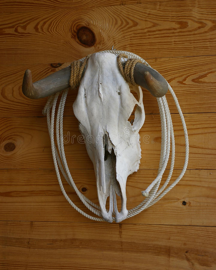 Download Cow Skull And Horns stock illustration. Image of skeleton - 23366010