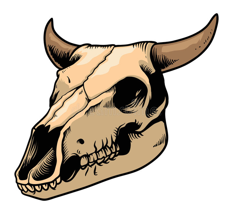 Download Cow skull stock vector. Illustration of experiment ...