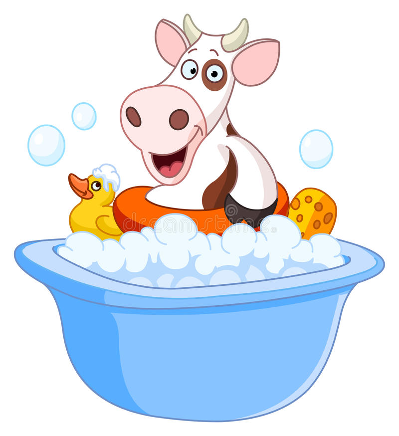 Cow taking a bath