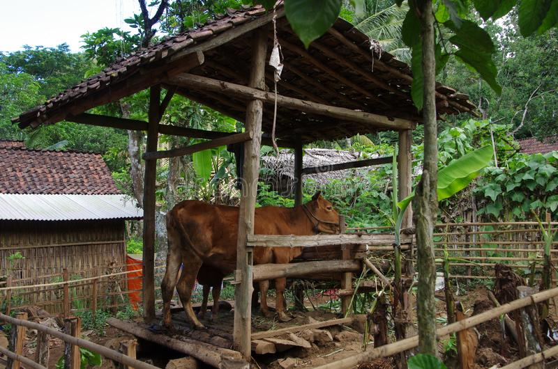 Village on the Java island in Indonesia royalty free stock images