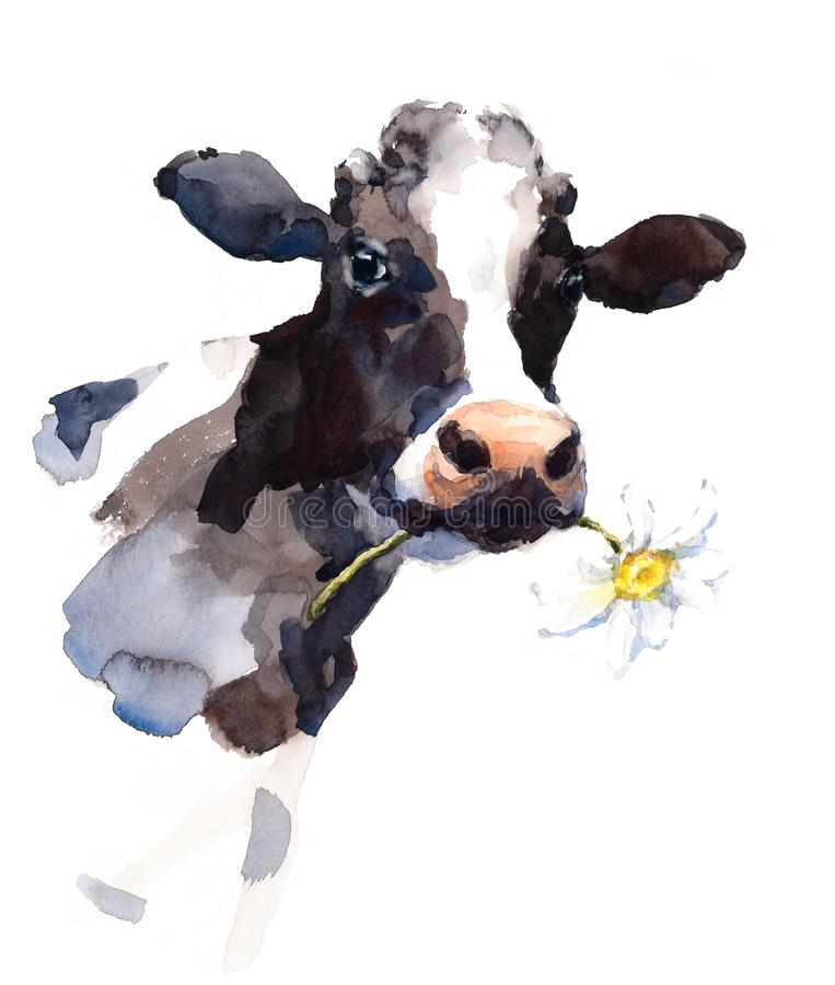 Cow Watercolor Farm Animal Illustration Hand Painted. Hand painted Watercolor illustration of black and white cow with a daisy flower in its mouth royalty free illustration
