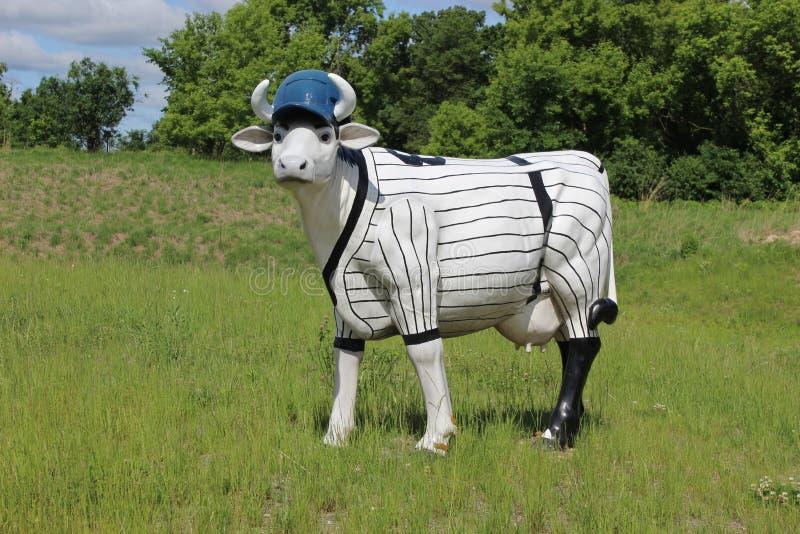 A Cow wearing a Baseball Uniform stock photography