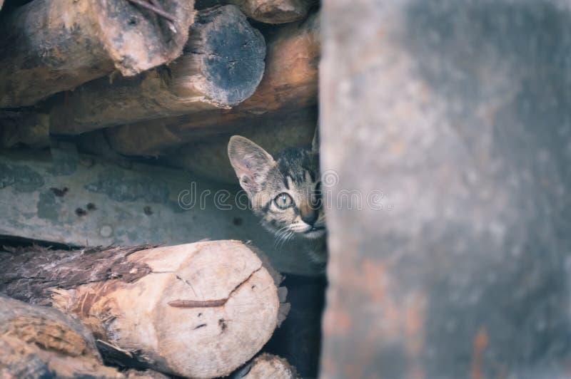 Wild cat watching. Coward Kitten surprised watching outside probe stock photography