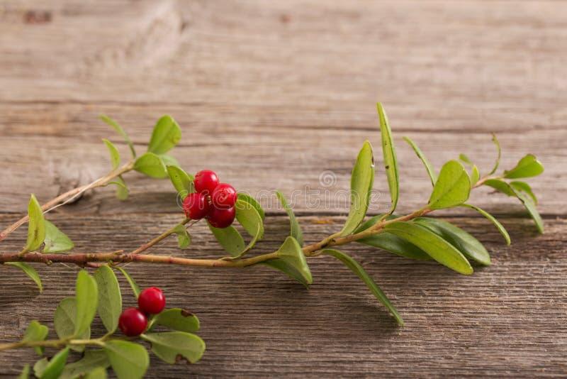 Cowberry на деревянной предпосылке стоковое фото rf