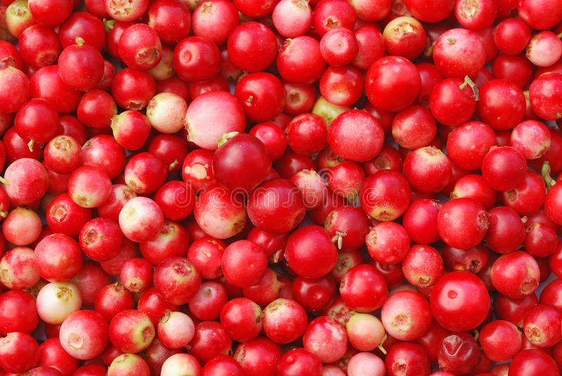 Cowberry. The heap of cowberry as background, top view stock image