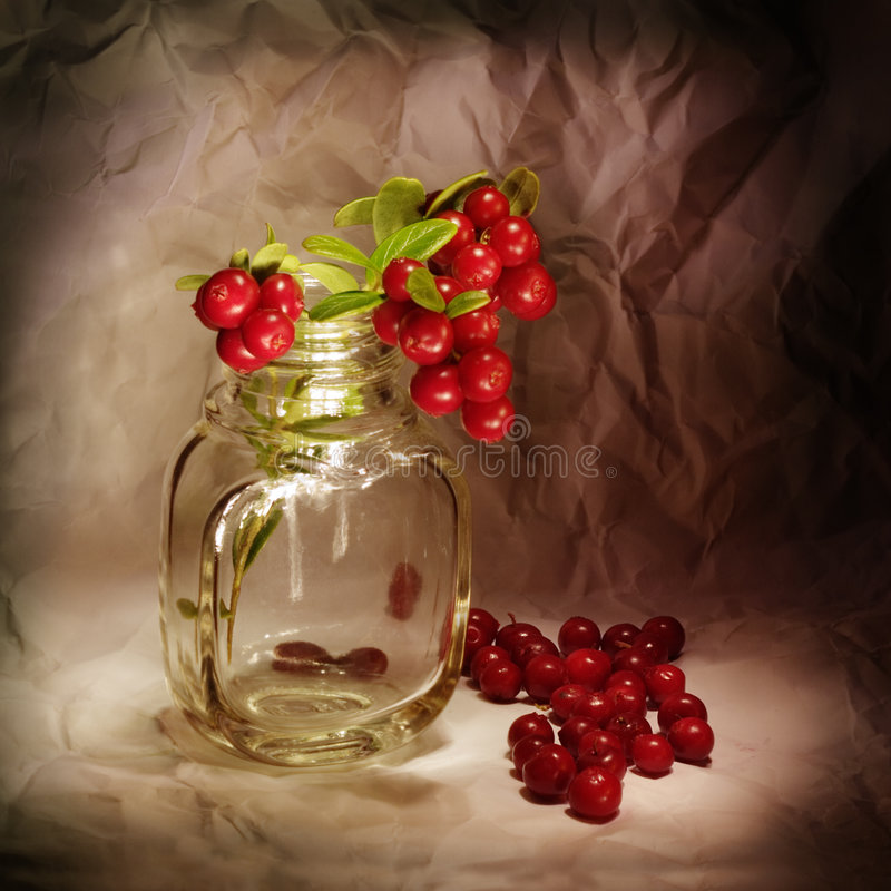 Cowberry. Autumn still-life with a cowberry royalty free stock images