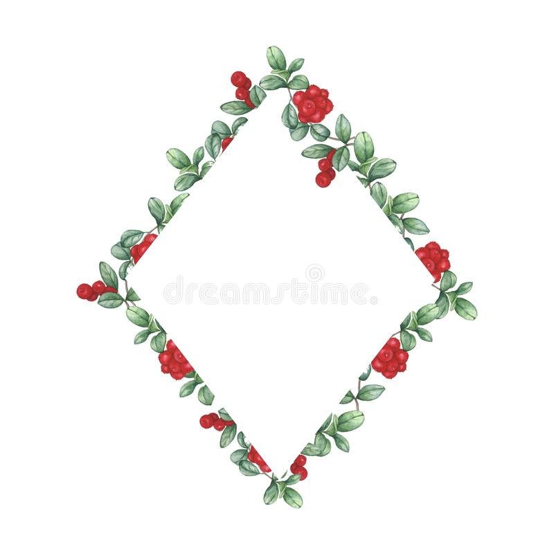 Cowberry. rhombus frame. Watercolor hand drawing. royalty free illustration