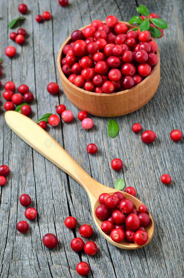 Cowberry in the wooden spoon. Cowberry in wooden bowl on rustic table royalty free stock image