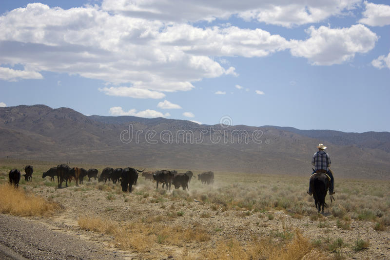 cowboyöken arkivbild
