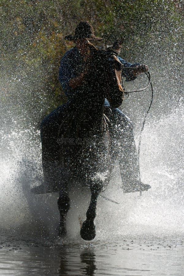 Cowboy 2 stock photo