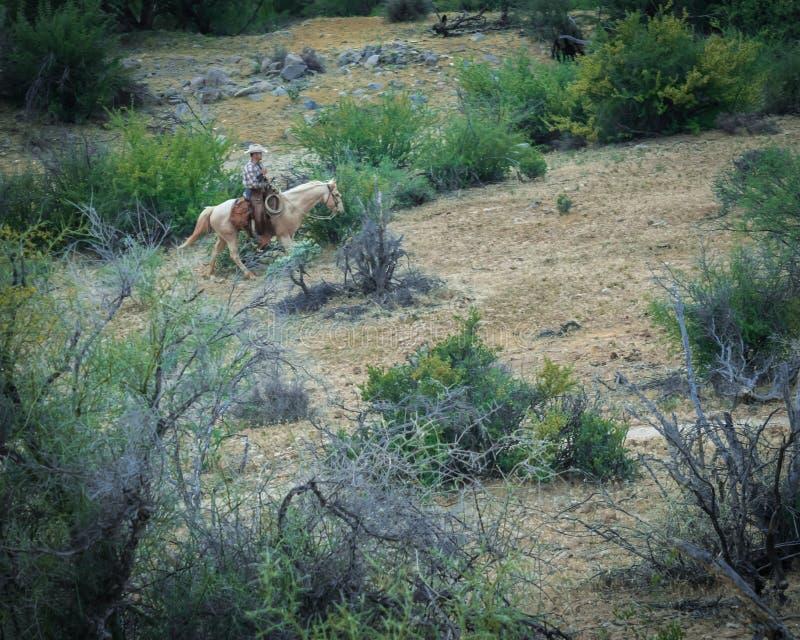 Cowboy in arizona desert. Cowboy riding a horse in the Arizona desert stock photo