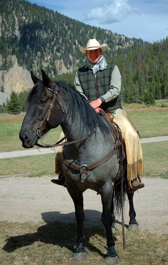 Cowboy Auf Blauem Roan Pferd Stockbild