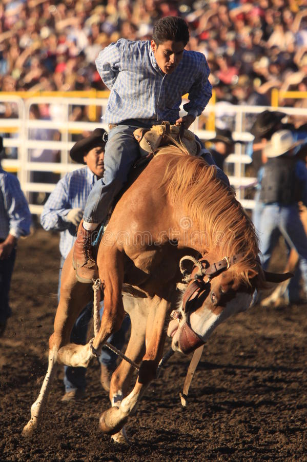 Cowboy auf Bronc lizenzfreies stockbild