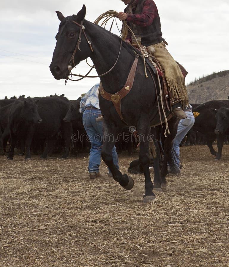 Cowboy auf Pferd stockbilder