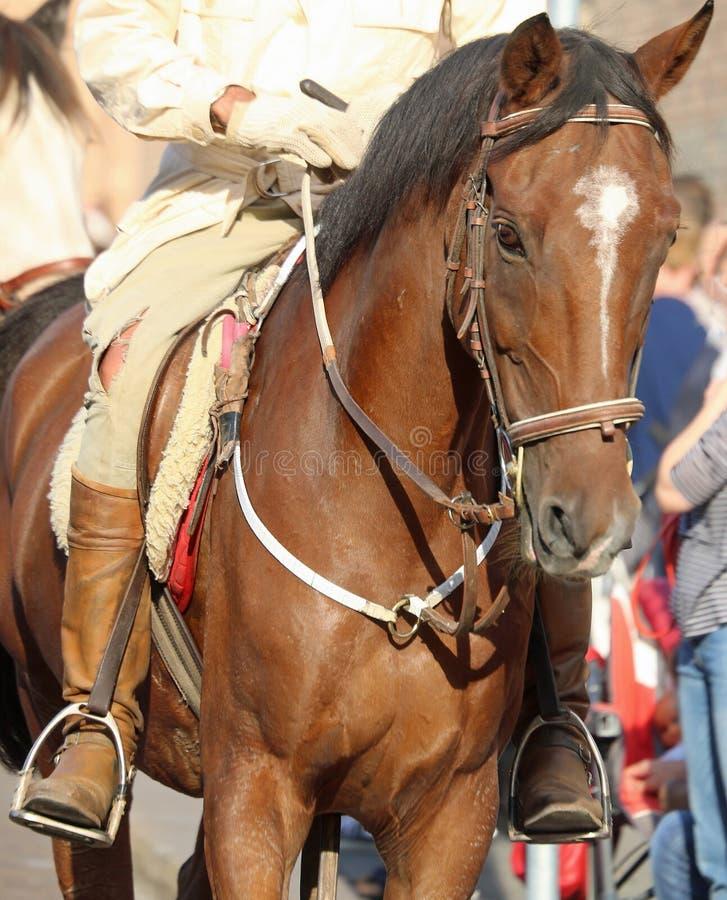 cowboy avec des bottes montant le cheval image libre de droits
