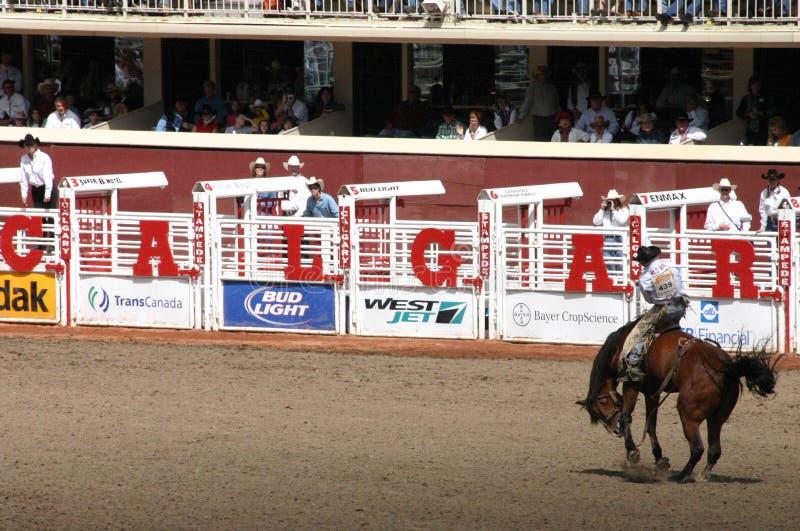 Cowboy bij het bucking van wild paard stock fotografie