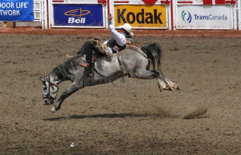 Cowboy bij het bucking van wild paard stock foto's