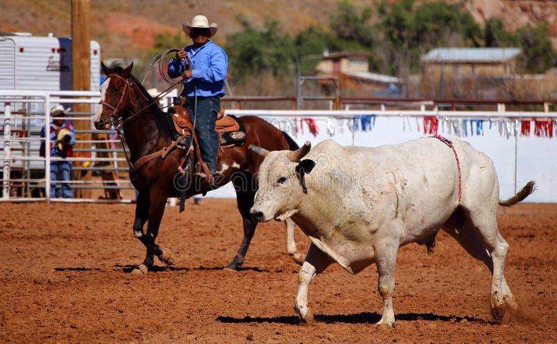 Cowboy and bull royalty free stock photo