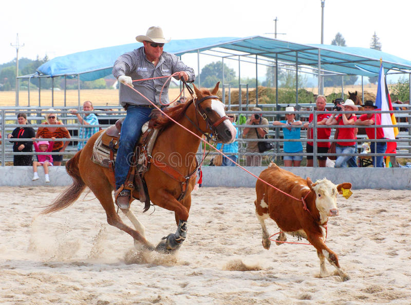 The Cowboy In A Calf Roping Competition Editorial Stock