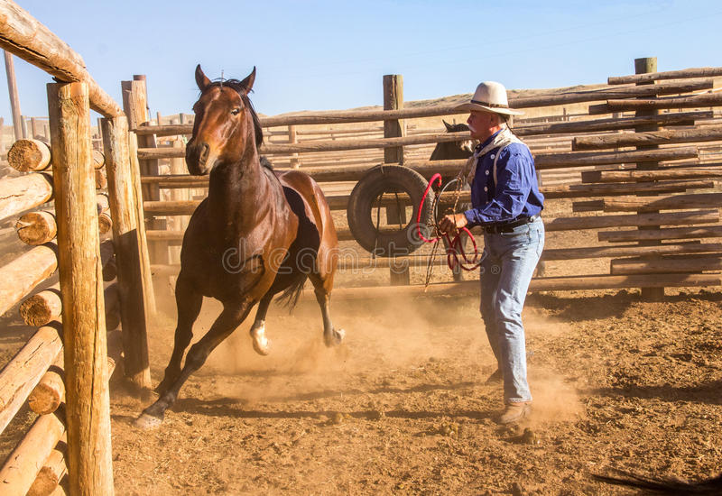 Cowboy Catching Horse in Corral royalty-vrije stock foto's