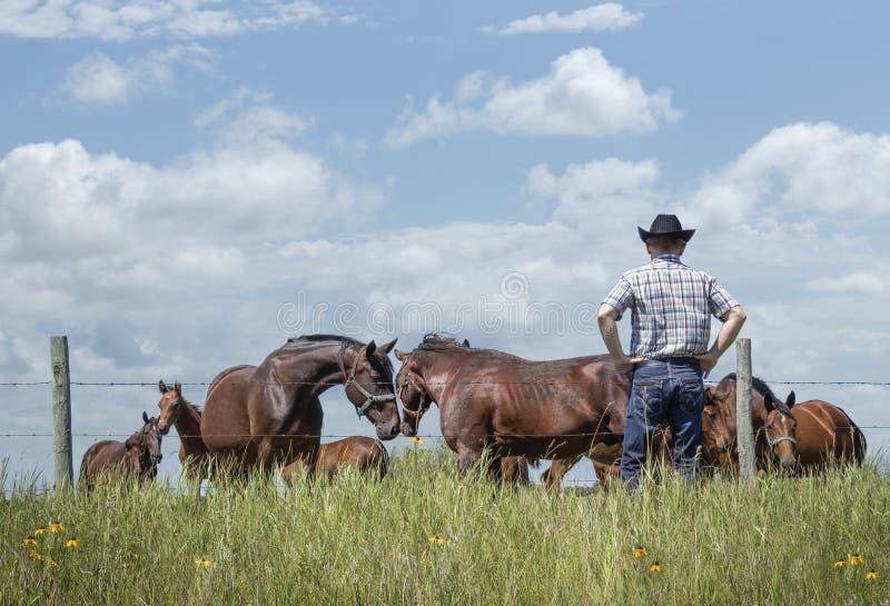 Cowboy che sta con le mani sulle anche che guardano insieme i suoi cavalli come due di loro gomitata le loro teste nell'amore fotografia stock