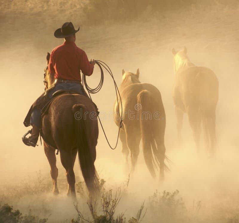 Cowboy dans la poussière photos libres de droits
