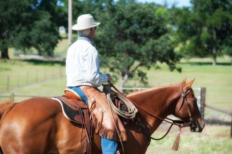 Cowboy, der ein Pferd reitet lizenzfreies stockfoto