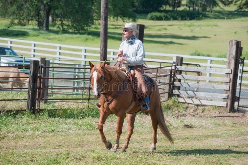 Cowboy, der ein Pferd reitet lizenzfreies stockbild