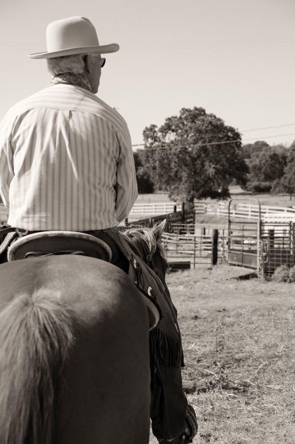 Cowboy, der ein Pferd reitet lizenzfreie stockfotos