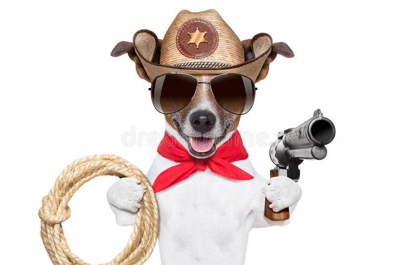 Cowboy Dog lizenzfreies stockbild