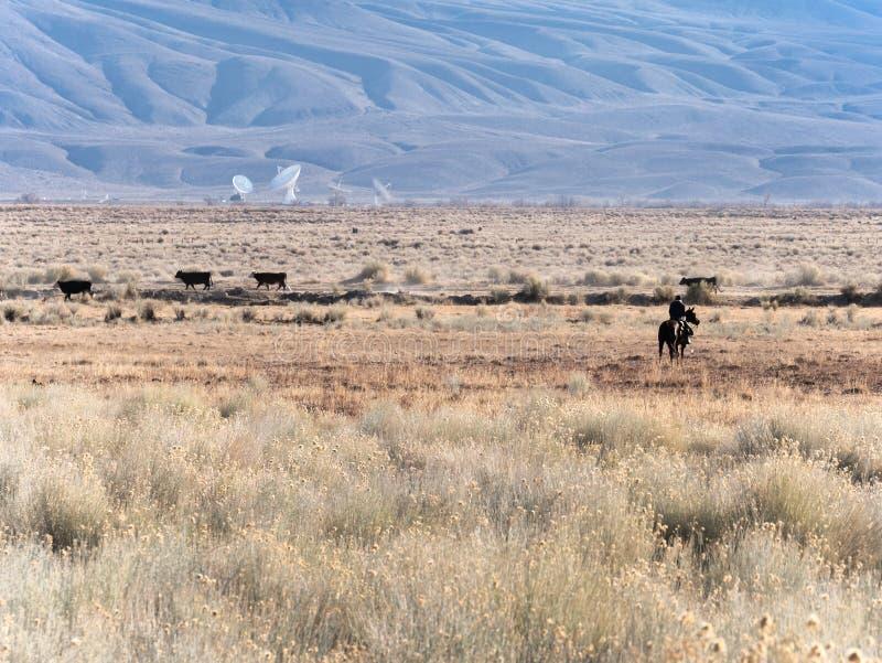 Cowboy in een high-tech wereld stock foto's