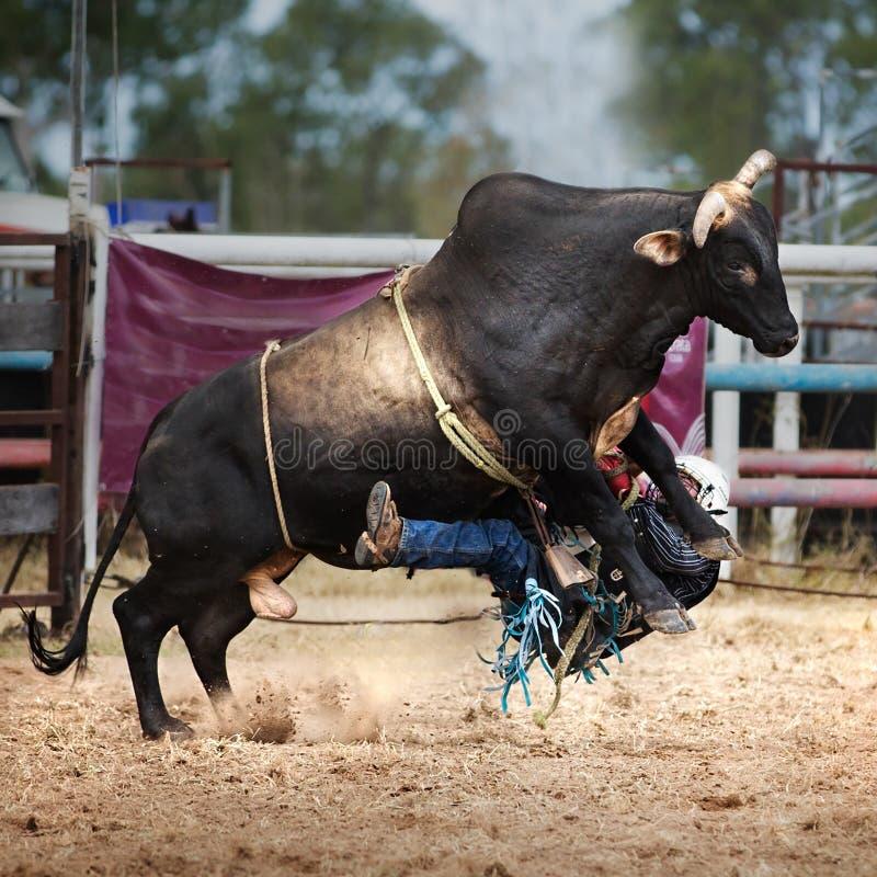 Cowboy Falls Off Bull under tjurridninghändelse på landsrodeon royaltyfri foto