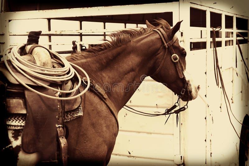 Cowboy Horse med repet i sadel royaltyfri fotografi