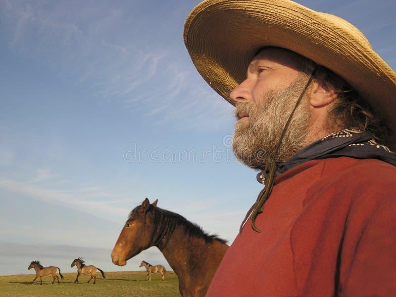 Cowboy idoso imagem de stock