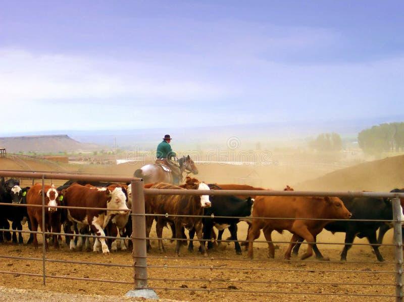 Cowboy lavorante fotografia stock libera da diritti