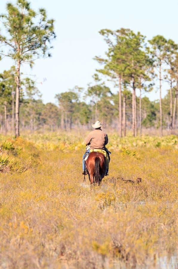 Cowboy lebt sein Vieh durch Marschland in Herden lizenzfreies stockfoto