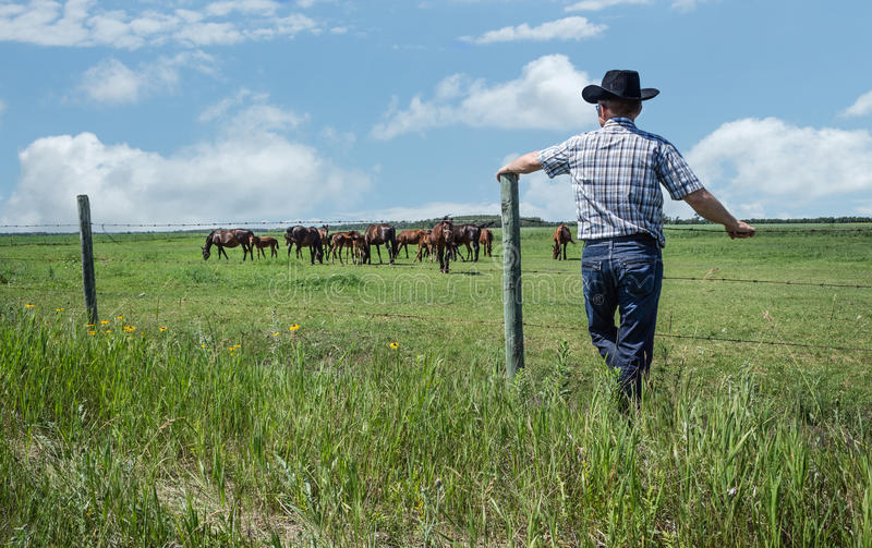 Cowboy med svart benägenhet för cowboyhatt mot staketet som stirrar på hans hästar fotografering för bildbyråer