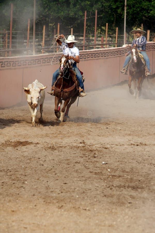 Cowboy mexicain de charros lassoing un taureau, TX, USA photographie stock libre de droits