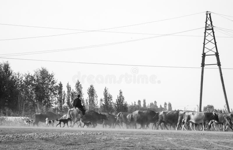 Cowboy nell'Azerbaigian fotografia stock