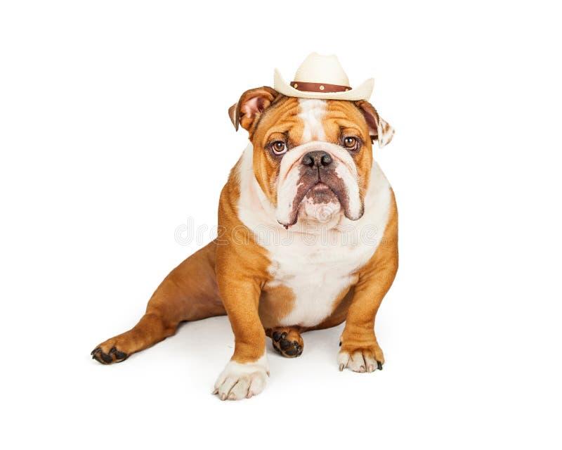 Cowboy occidental English Bulldog photo stock