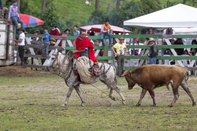 Cowboy på hästbaksida som jagas av tjuren arkivfoton