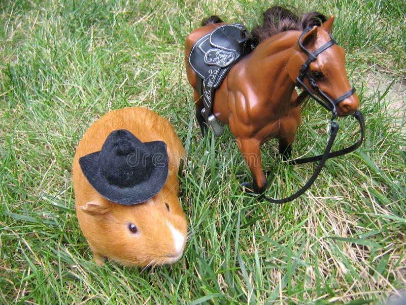 Cowboy Pig royalty free stock image