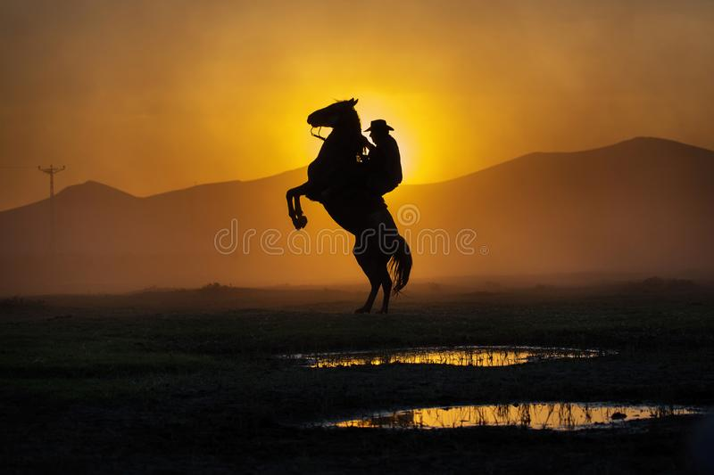 Cowboy puting his horse to stay in two feets at sunset with dust royalty free stock photography