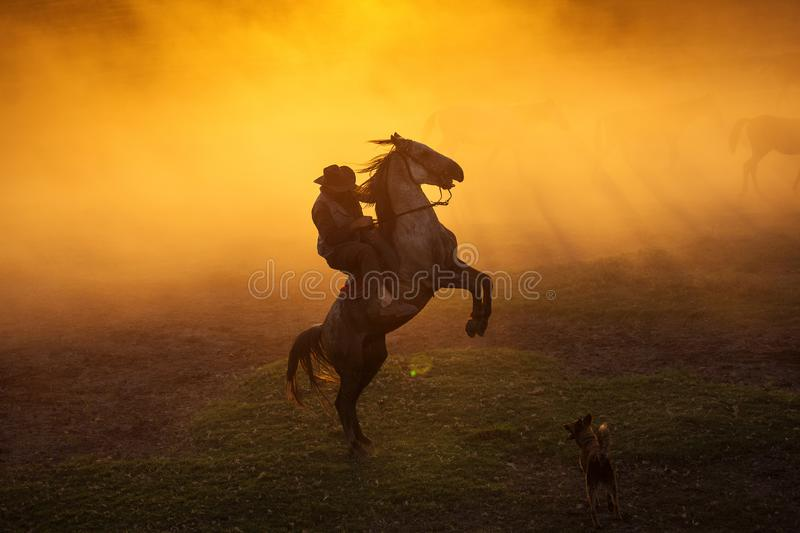 Cowboy puting his horse to stay in two feets at sunset with dust in background royalty free stock photography