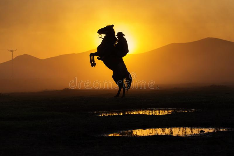 Cowboy puting his horse to stay in two feets at sunset with dust in background stock photos