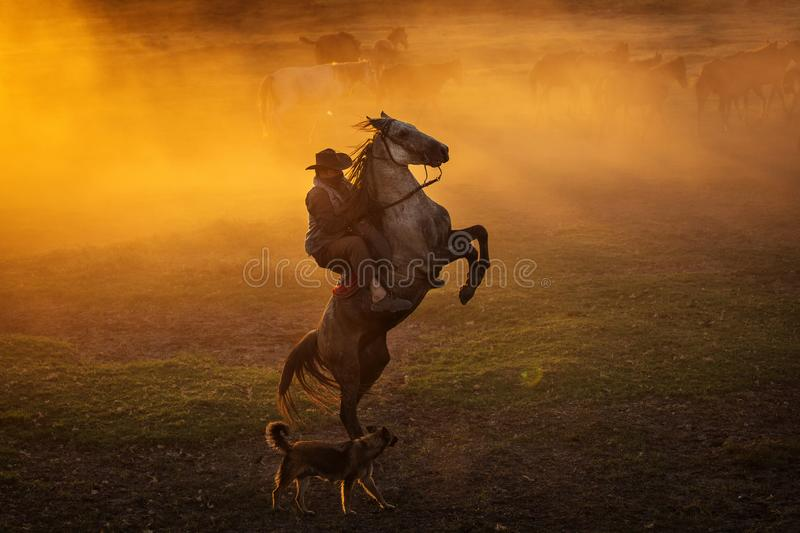 Cowboy puting his horse to stay in two feets at sunset with dust in background.  stock images